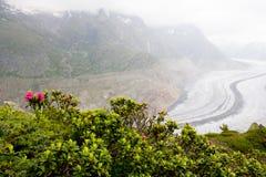 Aletsch glaciär Aletschgletscher i vår Royaltyfria Bilder
