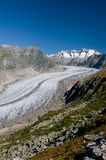 Aletsch Glacier. And the summits of Fiescher Gabelhorn, Schönbühlhorn, Wannenhorn in Valais, Switzerland, on a bright morning royalty free stock image