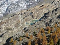 Aletsch Glacier And Colorful Larch Forest Stock Photos