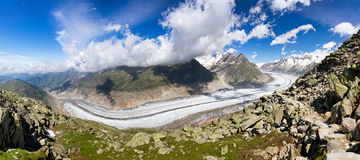 Aletsch glacier in summer. Large panorama of the breathtaking Aletsch glacier as seen from the Bettmer alp in switserland, on a sunny day with clouds in summer stock image