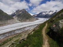 Aletsch Gletscher mit wandernder Spur Stockfoto