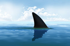 Aletta dello squalo al disopra della superficie Immagini Stock