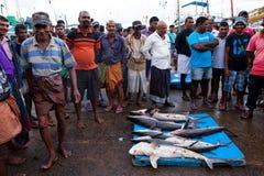 Aletta dello squalo - squali morti al mercato ittico - Beruwela, Sri Lanka fotografia stock libera da diritti