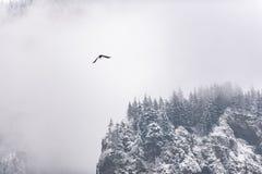 Aletta di filatoio enorme che galleggia intorno alla roccia nevosa fotografia stock libera da diritti