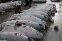 Aletta gialla del tonno/ispezione blu di qualità dell'aletta Fotografie Stock Libere da Diritti