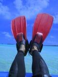 Alette sui piedini Fotografia Stock Libera da Diritti