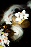 aleurites λουλούδι Μοντάνα Στοκ εικόνα με δικαίωμα ελεύθερης χρήσης