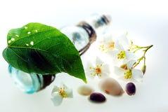 Aleurites Montana, e flor com garrafa de água foto de stock