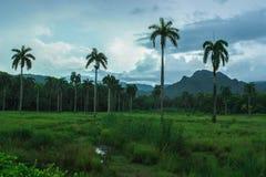 Alexander Humbold National Park in Cuba, dicht bij Baracoa en Guantanamo stock afbeelding