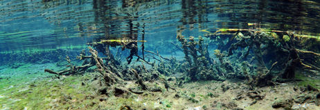 Alexander Springs Underwater Panoramic Royalty Free Stock Photos