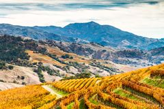 Alexander Valley Autumn. Amber vineyards paint the sides of the Alexander Valley, with Mount St. Helena in the background. Sonoma County, California, USA stock photo