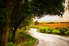Alexander Valley Lane. Shot of a country lane in the Alexander Valley of California stock photography