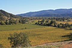 Alexander Valley Vineyards nella caduta Immagine Stock