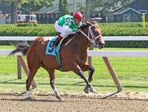 Alexandra Rylee Breaks Her Maiden. SARATOGA SPRINGS, NY - AUG 28: Jockey Cornelio Velazquez pilots Alexandra Rylee to her first win at Saratoga Race Course on Royalty Free Stock Photos