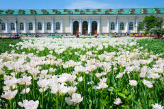 Alexandrovsky garden in Moscow, Russia Royalty Free Stock Images