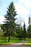 Alexandrovsky-Park in Tsarskoe Selo Lizenzfreie Stockbilder