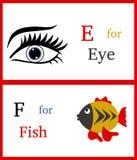 Alfabet E och F Arkivbild