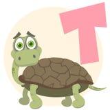 alfabetengelskasköldpadda Fotografering för Bildbyråer