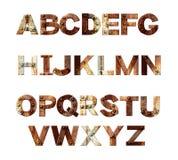 alfabetet letters rostiga metallrivets Fotografering för Bildbyråer