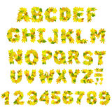 alfabethöst Arkivfoto