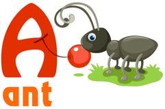 Alfabeto animal A Foto de archivo libre de regalías