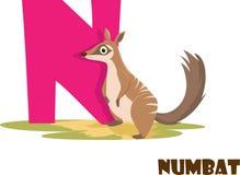 Alfabeto animal lindo del parque zoológico Letra N para Numbat foto de archivo libre de regalías