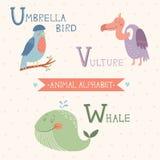 Alfabeto animal Pássaro de guarda-chuva, abutre, baleia Parte 6 Fotografia de Stock