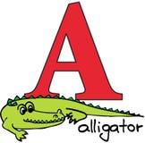 Alfabeto animale A (coccodrillo) Immagine Stock Libera da Diritti