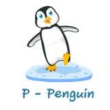 Alfabeto animale isolato per i bambini, P per il pinguino Fotografia Stock