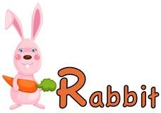 Alfabeto animale R per coniglio Fotografia Stock Libera da Diritti