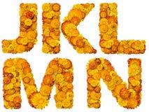 Alfabeto das flores amarelas e alaranjadas Imagem de Stock