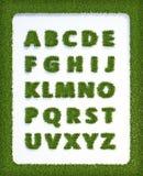 Alfabeto de la hierba