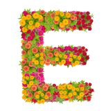 Alfabeto de la letra E hecho de la flor del zinnia Fotos de archivo libres de regalías