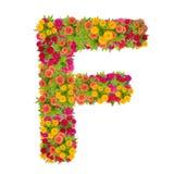 Alfabeto de la letra F hecho de la flor del zinnia Foto de archivo