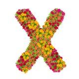 Alfabeto de la letra X hecho de la flor del zinnia Fotos de archivo