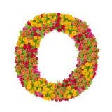 Alfabeto de la letra O hecho de la flor del zinnia Imagen de archivo libre de regalías