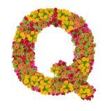 Alfabeto de la letra Q hecho de la flor del zinnia Imagenes de archivo