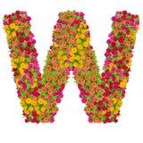 Alfabeto de la letra W hecho de la flor del zinnia Imagen de archivo