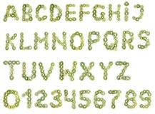 Alfabeto del kiwi foto de archivo