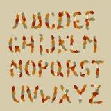 Alfabeto del latín del otoño Imagen de archivo libre de regalías