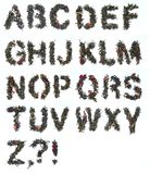 Alfabeto del tè verde Fotografia Stock Libera da Diritti