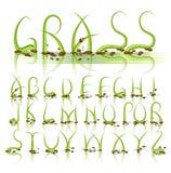 Alfabeto del vector de la hierba verde Imagenes de archivo
