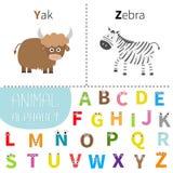 Alfabeto dello zoo della zebra dei yak della lettera Y Z ABC inglese con le lettere con il fronte, occhi degli animali Carte di i Immagini Stock