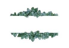 Alfabeto di concetto della natura delle foglie verdi in sha della lettera A di alfabeto Fotografie Stock