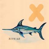 Alfabeto inglés, pez espada del Xiphias Fotos de archivo libres de regalías