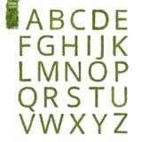 Alfabeto inglese dell'ago del pino Immagine Stock Libera da Diritti