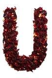 Alfabeto inglese Segni U con lettere dai fiori secchi del tè dell'ibisco su un fondo bianco Lettere per le insegne, pubblicità Fotografia Stock