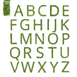 Alfabeto inglés de la aguja del pino Imagen de archivo libre de regalías