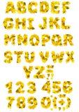 Alfabeto - letras com folhas de outono Fotos de Stock Royalty Free