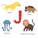 Alfabeto lindo del parque zoológico Imagenes de archivo